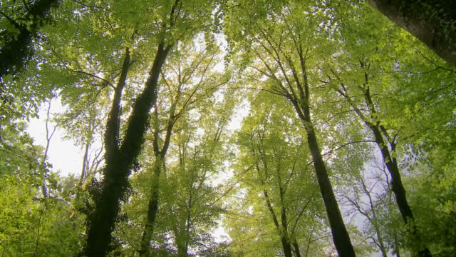 vídeos de stock e filmes b-roll de spring forest, sun shining through trees, - arvore