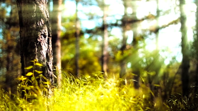 spring forest (loopable) - film moving image stock videos & royalty-free footage