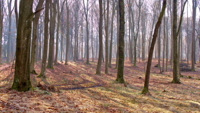 stockvideo's en b-roll-footage met ds spring forest - mei