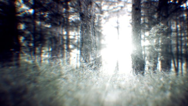 spring forest (loopable) - desaturated stock videos & royalty-free footage