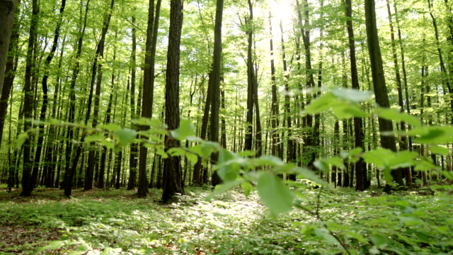 HD CRANE: Spring Forest