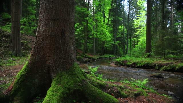 vídeos de stock, filmes e b-roll de spring forest com creek câmera em movimento - floresta da bavária