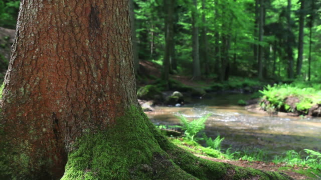 hd spring forest with creek dolly shot - tree trunk stock videos & royalty-free footage