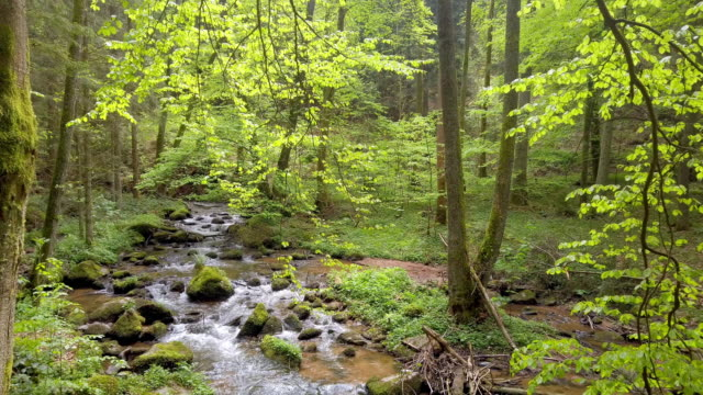 Spring Forest with Creek