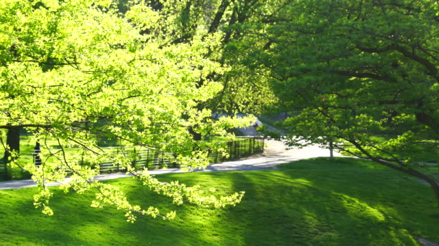 vídeos y material grabado en eventos de stock de spring fresh green trees surround park pathway, and spring sunlight illuminates trees and a wind shakes the leaves in central park new york. - central park manhattan
