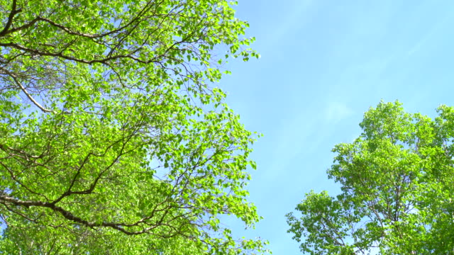 spring green forest - plant bark stock videos and b-roll footage