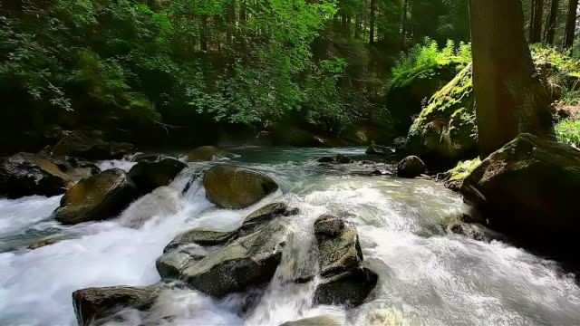 primavera nel parco nazionale great smoky mountains - tennessee video stock e b–roll
