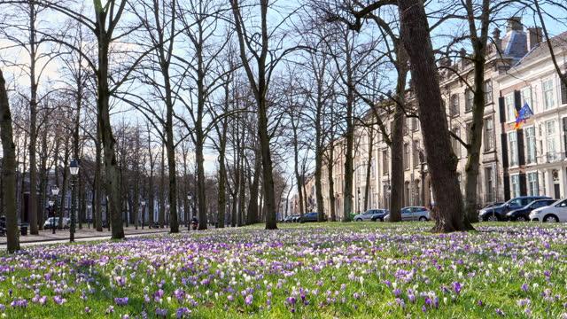 オランダの春。 - オランダ文化点の映像素材/bロール