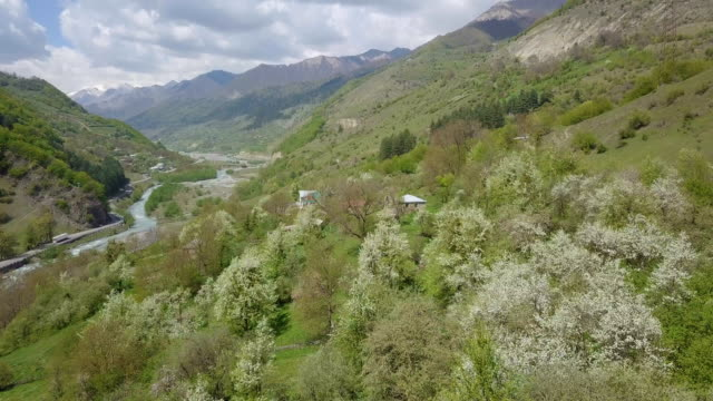 spring in the caucasus -plum trees in white flower bloom/ aerial - caucasus stock videos and b-roll footage