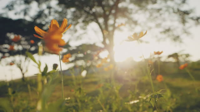 spring in the morning. - wonderlust stock videos & royalty-free footage