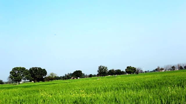 stockvideo's en b-roll-footage met lente landschap - volkorentarwe