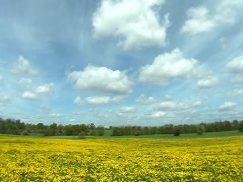 春の草地 - 四月点の映像素材/bロール