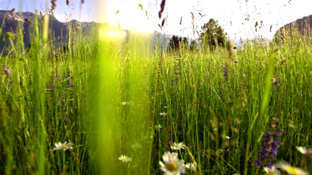 slo mo spring meadow - low angle view stock videos & royalty-free footage