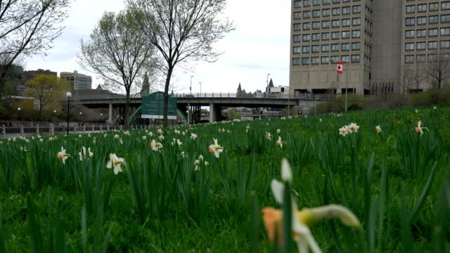 vídeos y material grabado en eventos de stock de mañana de primavera en ottawa - colina del parlamento ottawa