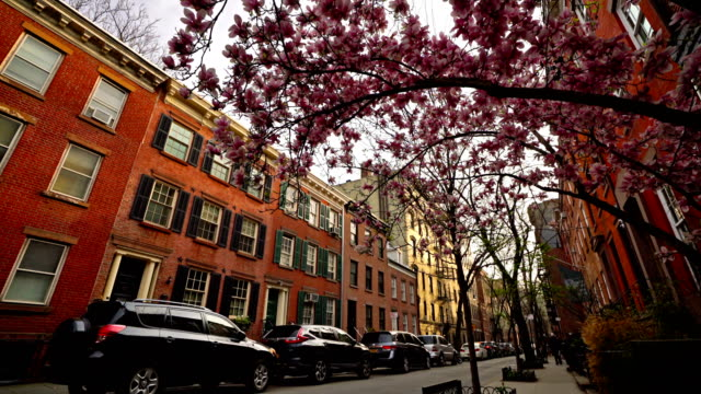 spring new york street- cherry blossoms blooming - flat stock videos & royalty-free footage