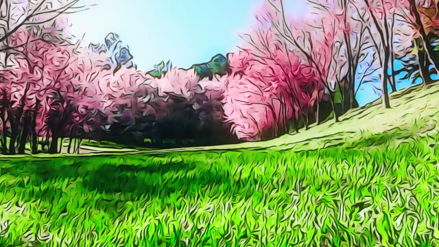 spring pink cherry blossoms in chiang mai - formal garden stock videos & royalty-free footage