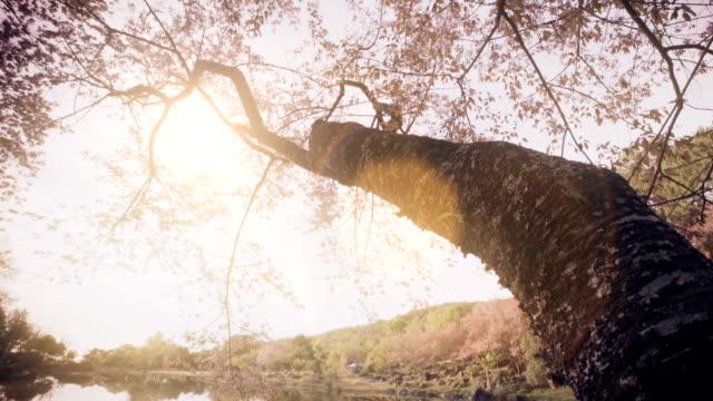 春のピンクの桜の - 整形式庭園点の映像素材/bロール