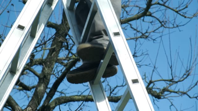 spring pruning of trees - ladder stock videos & royalty-free footage