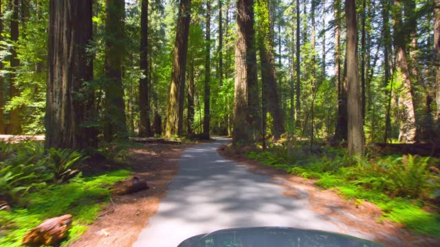 spring redwood forest - sequoia stock videos and b-roll footage