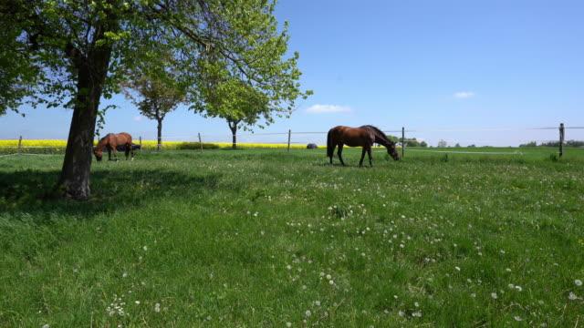 vídeos y material grabado en eventos de stock de spring scenery of pasture in stuttgart, germany - de cara al suelo