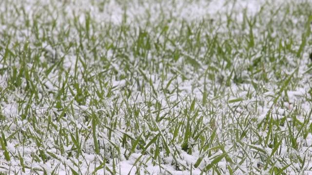vidéos et rushes de spring snowfall - gelée blanche