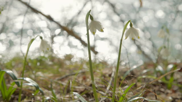 spring snowflakes on riverbank - march month stock videos & royalty-free footage