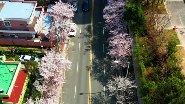 spring suburban street with white cherry blossom - boulevard stock videos & royalty-free footage