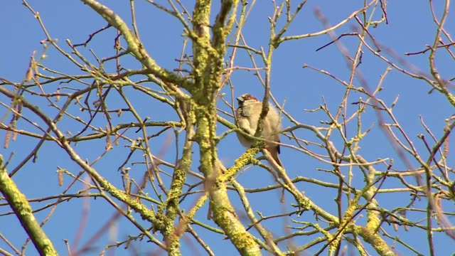 spring time in buckinghamshire - bird stock videos & royalty-free footage