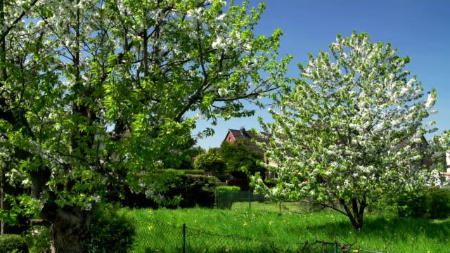 vidéos et rushes de grue bas: le printemps - parterre de fleurs