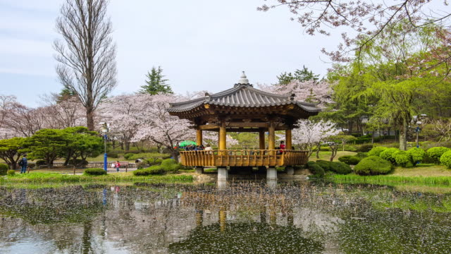 ms t/l spring view of bomun pavilion and pond covering by petals with tourists / gyeongju, gyeongsangbuk do, south korea - gyeongju stock videos & royalty-free footage