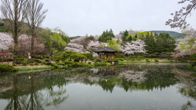 ws t/l spring view of bomun pavilion and pond covering by petals with tourists / gyeongju, gyeongsangbuk do, south korea - gyeongju stock videos & royalty-free footage