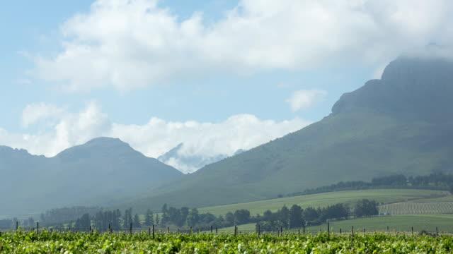 Spring Vineyards Time Lapse