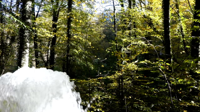 spring water coming from the the forest in the autumn