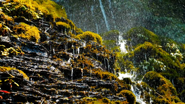spring water drops falls on green moss - falling water stock videos & royalty-free footage