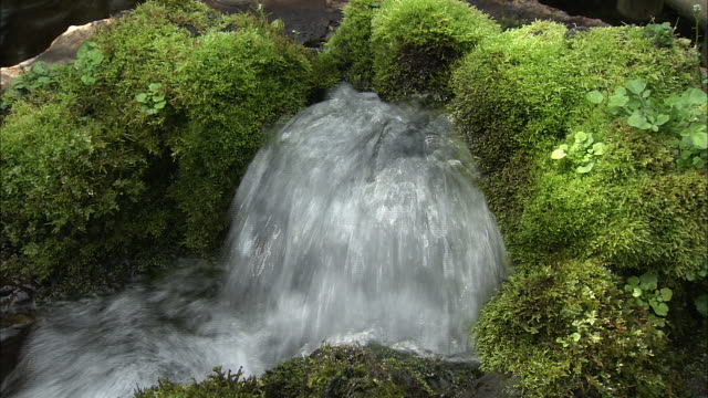 stockvideo's en b-roll-footage met spring water high quality water kyogoku-cho, hokkaido - bron