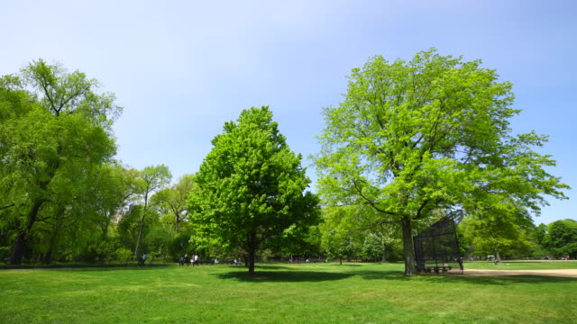 Spring wind shakes fresh green trees around the Great Lawn Central Park New York. Two big trees stand next to baseball diamond. People walk at pathway behind.