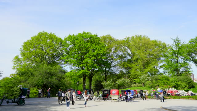 Spring wind shakes fresh green trees at Central Park New York. Many Pedi cabs wait for the rider.