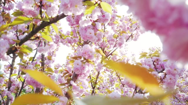 springtime finally has arrived! - life cycle stock videos & royalty-free footage