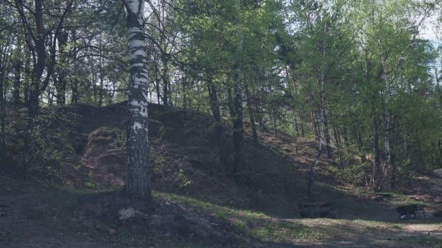 Springtime Forest Hill