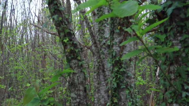 springtime, forest in malignac, mareuil sur belle, dordogne, perigord vert, nouvelle aquitaine, france, europe - nouvelle aquitaine stock videos and b-roll footage
