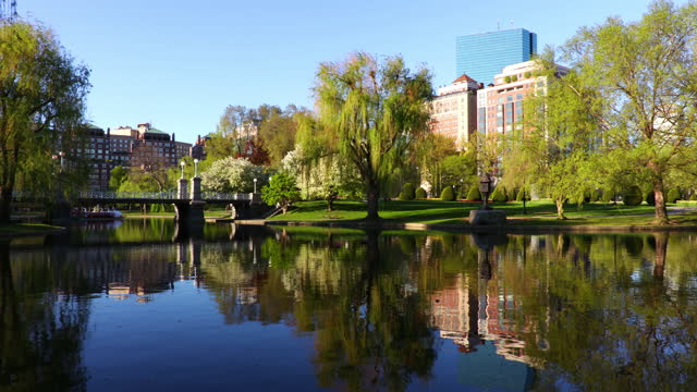 springtime in the boston public garden - back bay boston stock videos & royalty-free footage