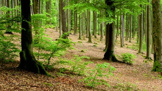 springtime in the forest, spessart, franconia, bavaria, germany - 枝点の映像素材/bロール