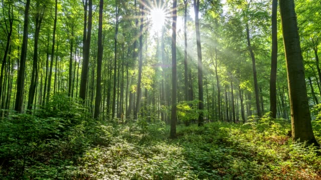springtime in the forest with sun, spessart, franconia, bavaria, germany - lush video stock e b–roll