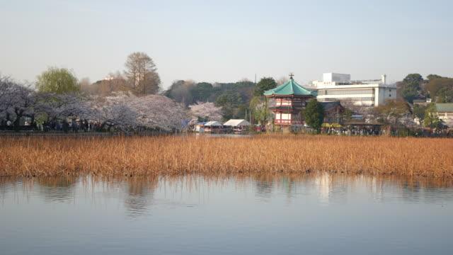 Springtime in Tokyo