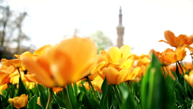 springtime in turkey. minaret and flowers - turkish culture stock videos and b-roll footage