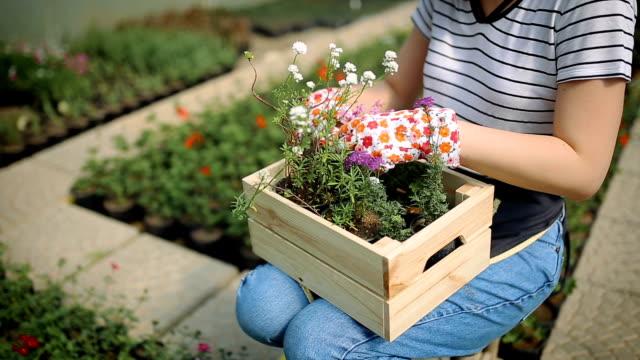 springtime jobb i växthus - trädgårdshandske bildbanksvideor och videomaterial från bakom kulisserna