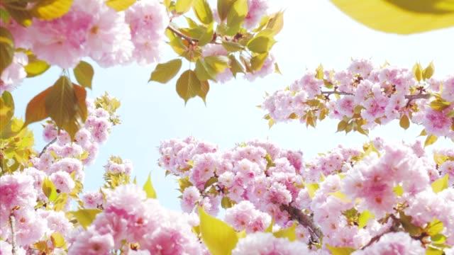 springtime magic! - life cycle stock videos & royalty-free footage