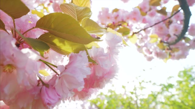 springtime moments. - grounds stock videos and b-roll footage