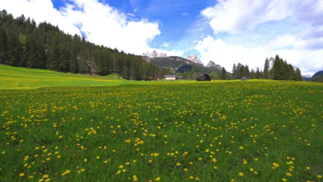 springtime of dolomites with wildflowers / italy - slätt bildbanksvideor och videomaterial från bakom kulisserna