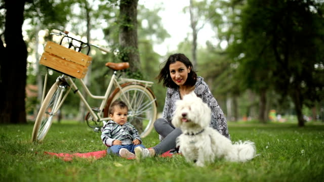 springtime outdoors - maltese dog stock videos and b-roll footage